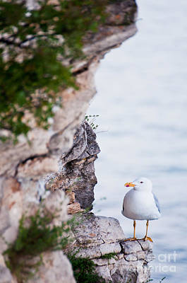 Photograph - On The Cliffs Of Rocca Di Manerba by Simona Ghidini
