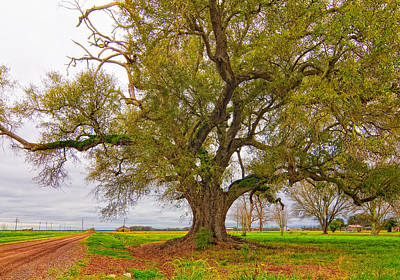 Oak Photograph - On The Delta by Steve Harrington
