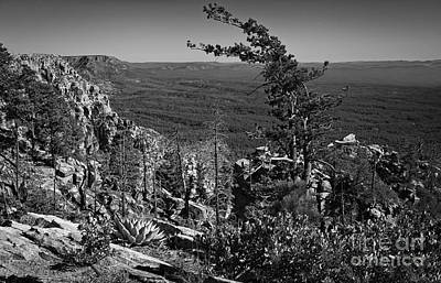 Photograph - On The Edge Of The Mogollon Rim In Black And White by Lee Craig