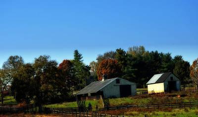 Photograph - Life On The Farm by Cathy Shiflett