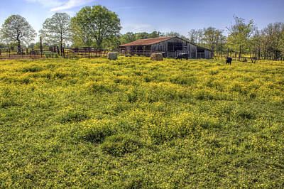 Photograph - On The Farm - Yellow Pastures And Cows by Jason Politte