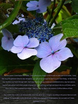 On The Fence Hydrangea Eph 3 14 21 Art Print by Nicki Bennett
