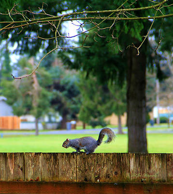 Photograph - On The Fence by Jeanette C Landstrom