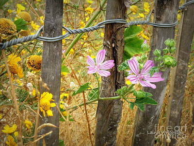 On The Fence Art Print by Lainie Wrightson