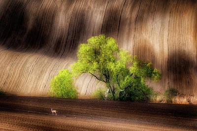 Ladder Photograph - On The Fields by Piotr Krol (bax)