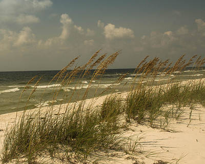 Salt Air Photograph - On The Gulf by Maria Suhr
