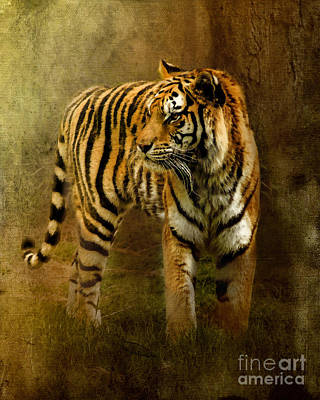 The Tiger Hunt Photograph - On The Hunt by Betty LaRue
