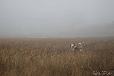 Photograph - On The Hunt by Robert Banach