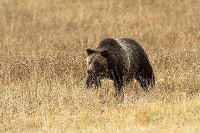 Photograph - On The Hunt by Shari Sommerfeld