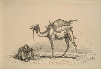Camels Painting - On The Nile - Alexandria - Camel And Resting Rider by Celestial Images