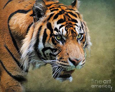 Cat Art Photograph - On The Prowl by Jai Johnson