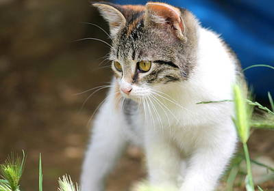 Cat Photograph - On The Prowl by Rebecca Davis