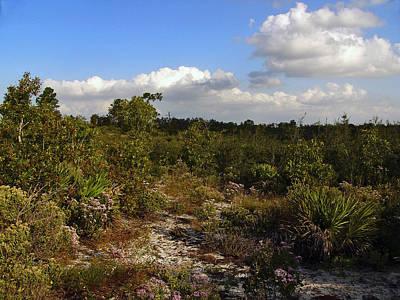 Photograph - On The Ridge. Catfish Creek Preserve. by Chris  Kusik