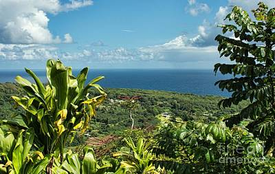 Photograph - on the road to Hana by Peggy Hughes