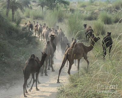 Photograph - On The Road To Pushkar by PJ Boylan