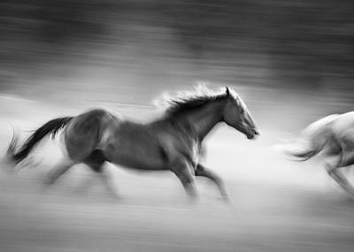 On The Run Art Print by Dianne Arrigoni