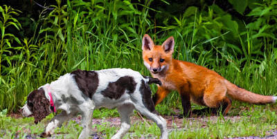 Fox Digital Art - On The Scent Impasto by Steve Harrington