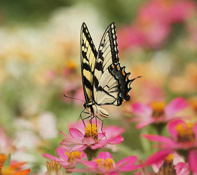 On The Top - Swallowtail Butterfly Art Print by Kim Hojnacki