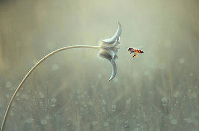 Bee Wall Art - Photograph - On The Way by Edy Pamungkas