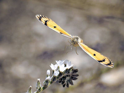 Insect Photograph - On The Way by Meir Ezrachi