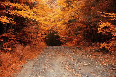 Photograph - On The Way To Muskoka, Ontario, Canada by Roland Shainidze Photogaphy