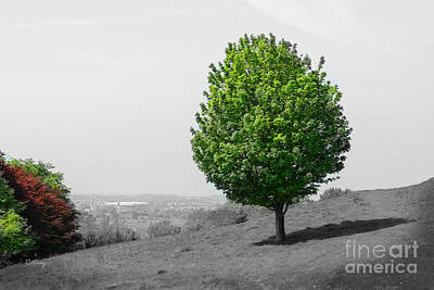 Photograph - The Lone Tree On The Climb Up To Glastonbury  by Rene Triay Photography