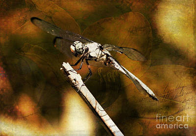 Mixed Media - On The Wings Of Dragonflies by Patricia Griffin Brett