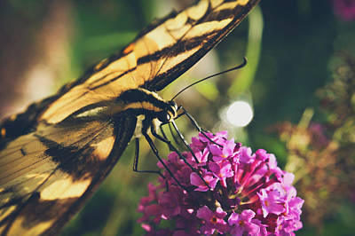 On The Wings Of Spring Art Print by Jessica Brawley