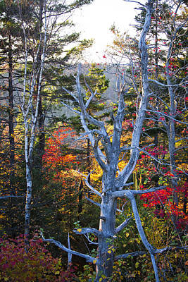 Photograph - On Top Of Bald Mountain IIi by David Patterson