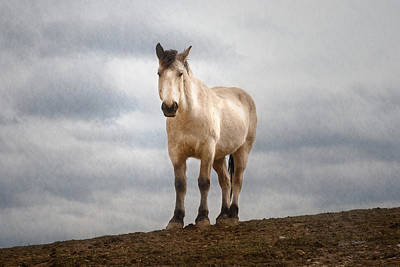 Horses Photograph - On Top Of The Hill by Jillian  Chilson
