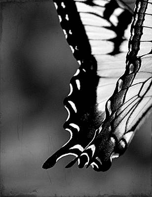 Photograph - On Wings by Michelle Ayn Potter