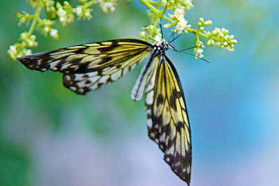 Photograph - On Wings Of Grace by Tam Ryan