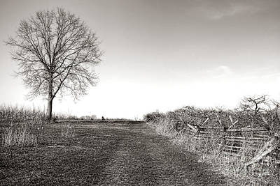 Leafless Tree Photograph - Once A Battlefield by Olivier Le Queinec