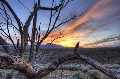 Photograph - Once Mesquite by Anthony Citro