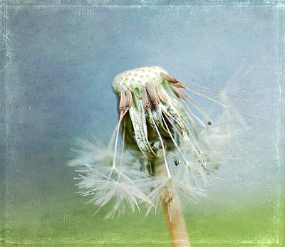 Photograph - Once Upon A Dandelion by Fraida Gutovich