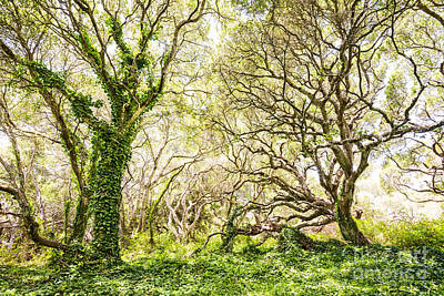 Oak Trees Photograph - Once Upon A Time by Jamie Pham