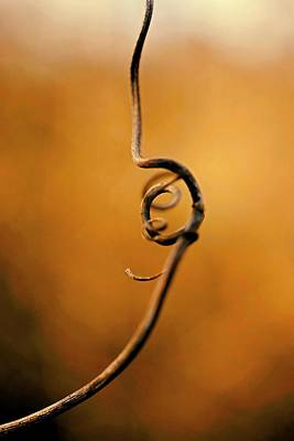 Photograph - Once Upon A Vine by Beth Akerman