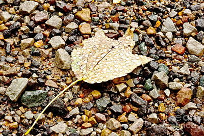 Photograph - One Autumn Leaf by Jill Smith
