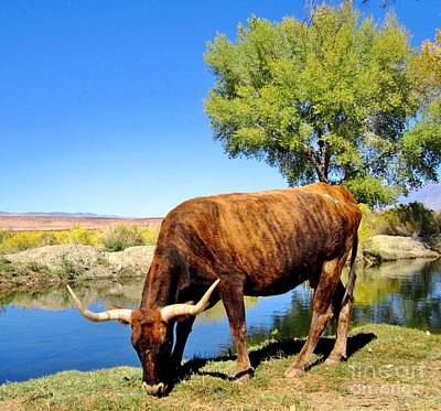 Art Print featuring the photograph One Big Boy by Marilyn Diaz
