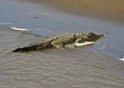 Photograph - One Big Crocodile by Kirsten Giving
