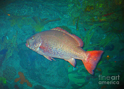 Photograph - One Colorful Fish by Connie Fox