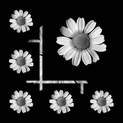 Wildflower Photograph - One Daisy by Bishopston Fine Art