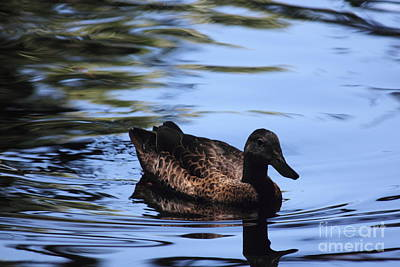 Wall Art - Photograph - One Duck On A Pond by Sara Ricer