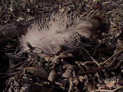 R. Mclellan Photograph - One Fallen Feather by R McLellan