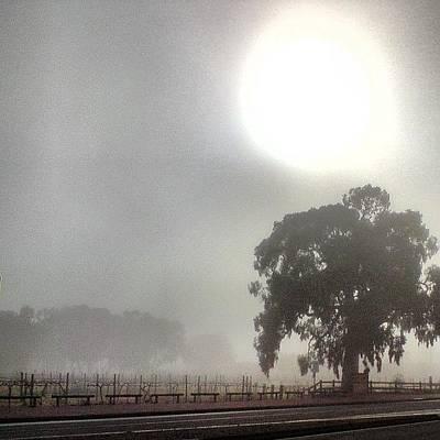 Vineyard Wall Art - Photograph - One Foggy Morn. by Cherie Harvey