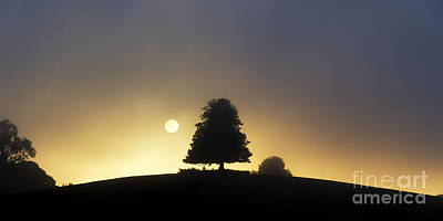 Photograph - One Foggy Morning by Tim Gainey