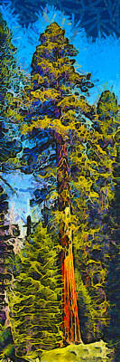 Photograph - One Giant Abstract Sequoia by Barbara Snyder
