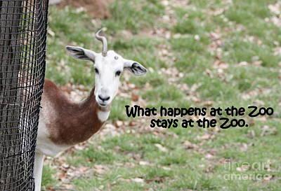 Addra Gazelle Photograph - One Horned Gazelle by Patti Whitten