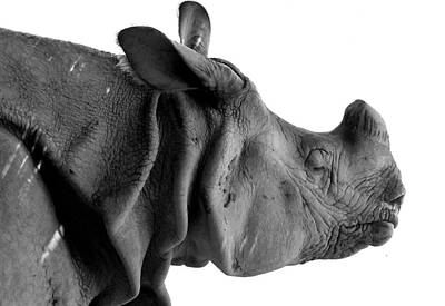 Greater One Horned Rhino Photograph - One-horned Rhino by Atish Aman