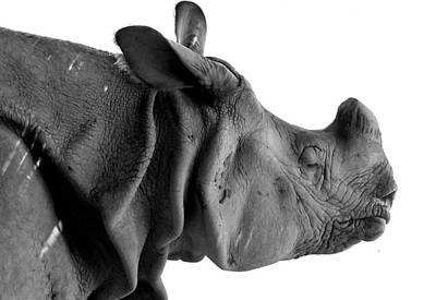 One-horned Rhino Original